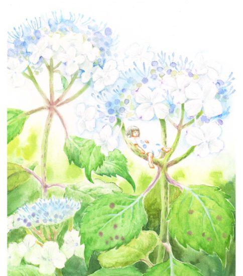 『紫陽花でおひるね』