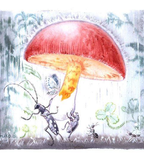 『森の雨傘』
